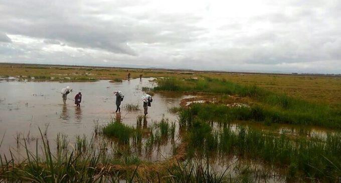 FAMOKARAM-BARY ALAOTRA  : Mila fanarena ireo  fotodrafitrasan'ny sopitr'i Madagasikara