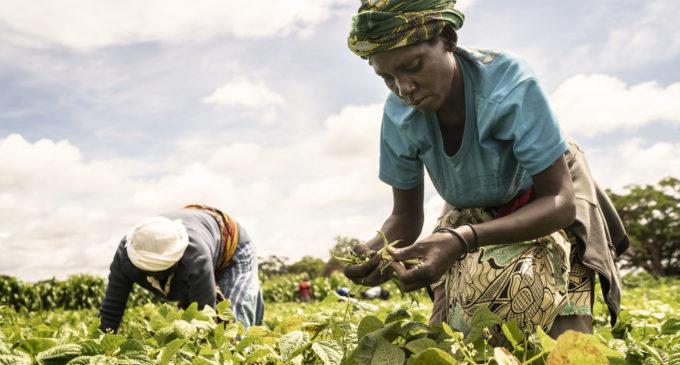 FAO. UNE ALIMENTATION SAINE NE  DOIT PAS ÊTRE UN LUXE POUR LES AFRICAINS